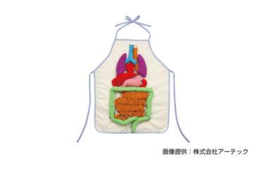 内臓の大きさ説明エプロン